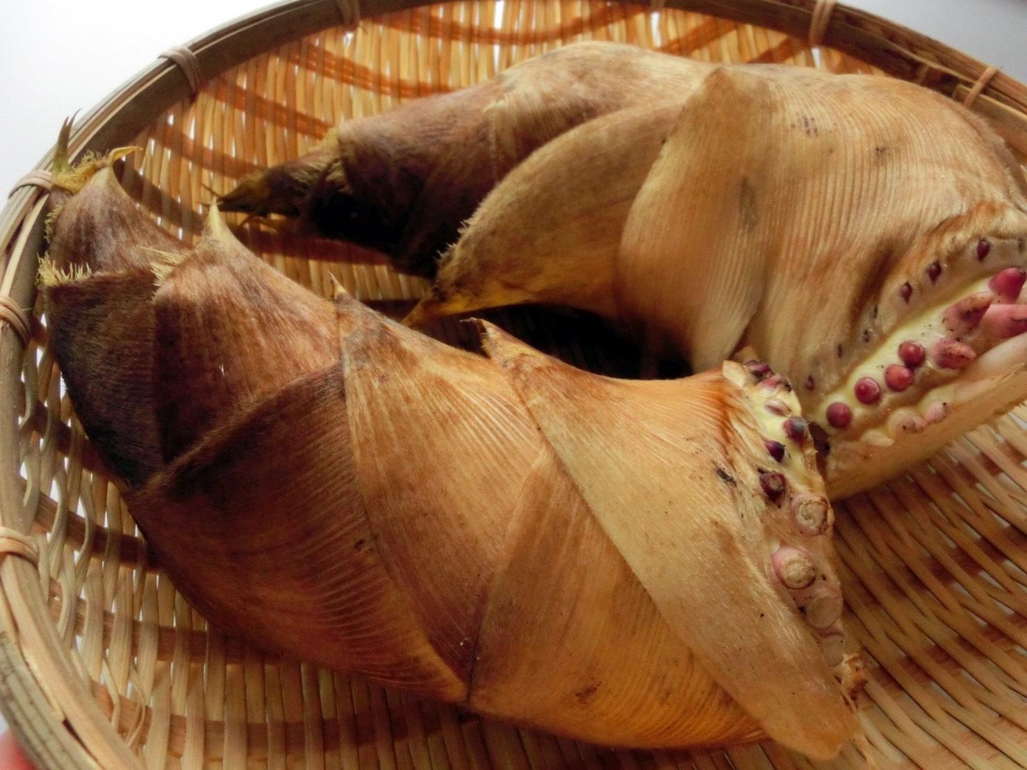 竹の子 時期