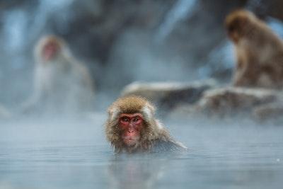 上がり 熱 風呂 お