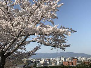 京都 桜の見頃の時期、混雑なし・日帰りでまるっと楽しむ 7つのポイント