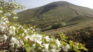 山の花の記憶 ③シロヤシオ