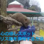 【癒しスポット】疲れた心が軽くなる~リス園(東京)を満喫する重要ポイント‼