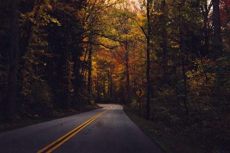Road through Autumn Trees