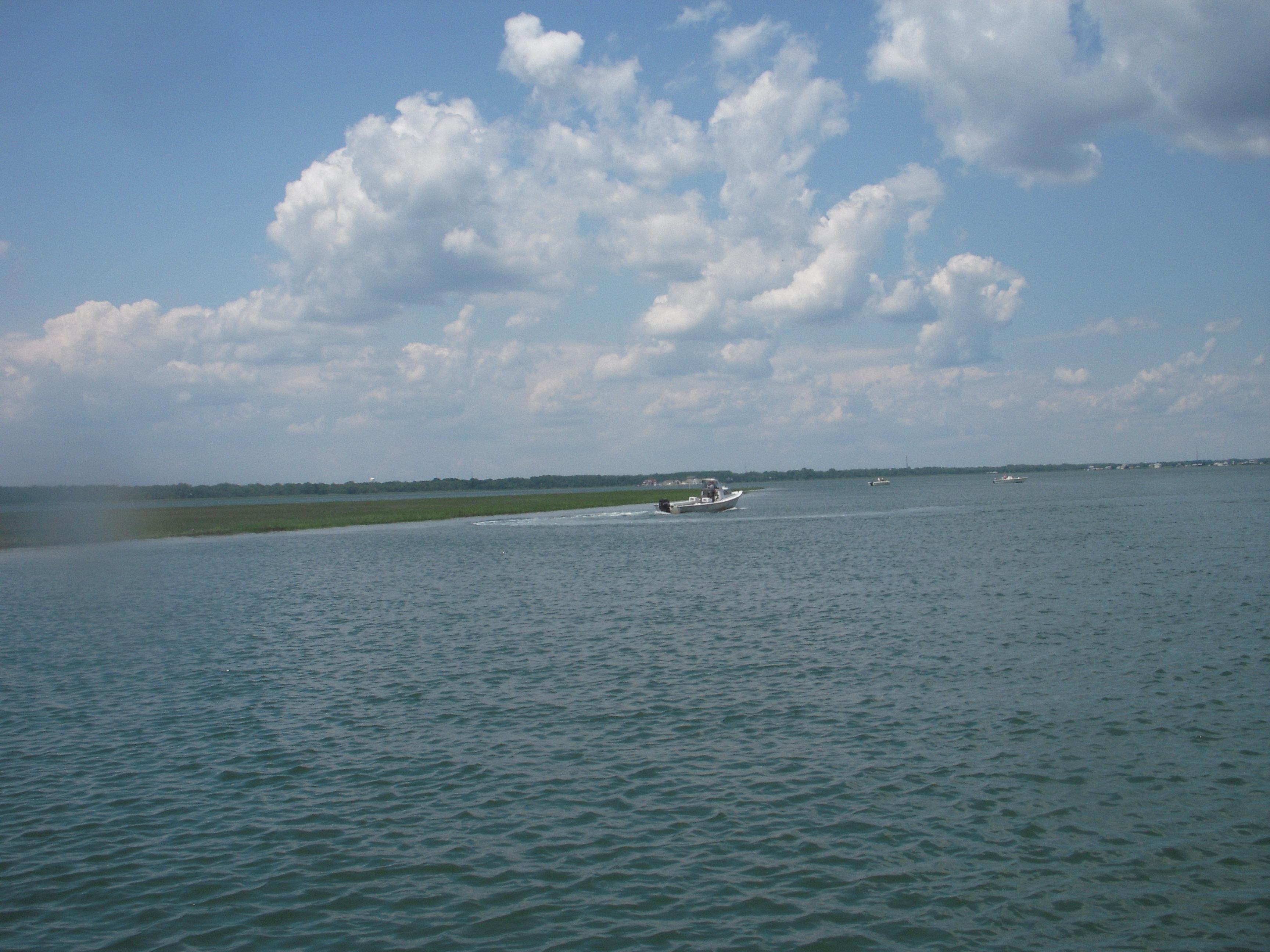 flounder 082