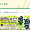 懸賞ブログ_8/24 懸賞情報 福岡のぶどうプレゼント