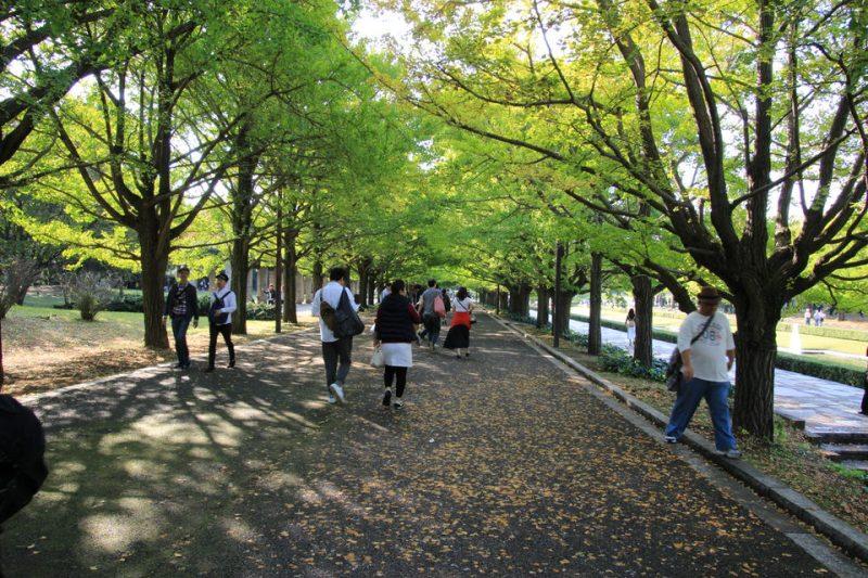 昭和記念公園のコスモス-Japan Nomad (9)