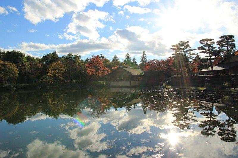 昭和記念公園の紅葉-Japan Nomad (12)
