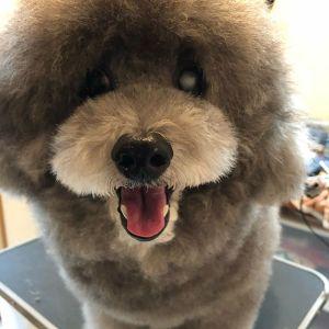 .モデル犬:ロディちゃん.今日はK様の愛犬の専属トリマーになろう!教室第1回目でした〜^^.ママさんには爪切りやバリカンなどを少しだけやってもらいつつ、ドライングまでの過程を一通りお伝えしました!.お話しなければならないことが沢山あるので、1度に全てを頭に入れることは難しいと思いますが、ゆっくりしっかり進めていきます^^.これからもよろしくお願いいたしまーす!.#dogofthedayjp #dogoftheday #instagramdogs #dogstagram #出張トリミング #出張トレーニング#トリミング教室 #トリミング#grooming #犬のしつけ#お家でトリミング #トリミングの仕方#シニア犬 #ママミング #パパミング#シニア犬 #ママミング #パパミング#いぬ部#大阪 #奈良 #兵庫 - Instagram更新しました!