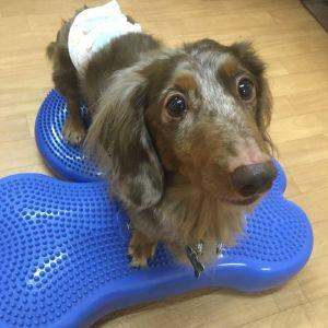 .【新サービスのお知らせ】.愛犬の専属トリマーになろう!教室などが落ち着いて参りましたので、兼ねてより準備をしておりました、 .【出張トレーニング・しつけ】.のサービスを始めたいと思います^^それに伴い、トレーニング向けのオヤツの販売も始めたいと思っております^^仕入れが出来次第お知らせして参りますね!興味があればサンプル等お持ちしますので、お声かけよろしくお願いいたします〜♡.Kent'chipsの出張トレーニングは「コミュニケーション作り」をメインとしたレッスンを行っております^^.そのため、*しつけをした方が良いとは思うけど、ウチの子は問題行動とか無いし、教室に申し込みにくい、又はどう言って参加したら良いのか分からない。.*愛犬と一緒に何かをしたいけど、アジリティや訓練競技会、ドッグダンスまではできないな…。.*体だけじゃなく、頭を使ったトレーニングをしたい。.と言った方向けに、ゲームなどを通して信頼関係の強化、集中力アップ、自立心を育むことに力を入れております^^.もちろん!問題行動の改善にも応用していただけます!.どうやってコミュニケーションを取ればいいのか分からないうちに、問題行動をどうにかしようとトレーニングをすると大変時間がかかります。または、ご愛犬だけ、トレーナーさんによりとってもお利口さんになっても、ご家族の方がついていけずに、上手く応用できないことも多いです。.そうならないように、コミュニケーション作りをメインにしたレッスンに力を入れています!.少しでも気になるな〜♡と思っていただけましたら、ぜひ1度お問い合わせ下さいませ^^.新サービスもよろしくお願いいたします.#dogofthedayjp #dogoftheday #instagramdogs #dogstagram #出張トリミング #出張トレーニング#トリミング教室 #トリミング#grooming #犬のしつけ #しつけ教室#お家でトリミング #トリミングの仕方#シニア犬 #ママミング #パパミング#いぬ部#大阪 #奈良 #兵庫 - Instagram更新しました!