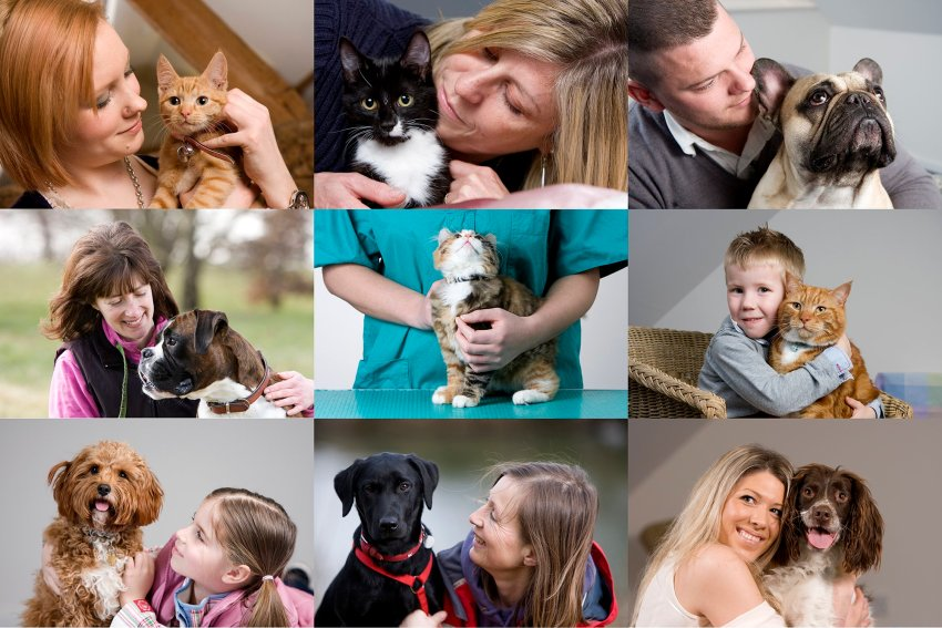 Commercial Photography for Pet Microchipping & Pet Insurance