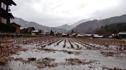Shirakawa rainy rice field