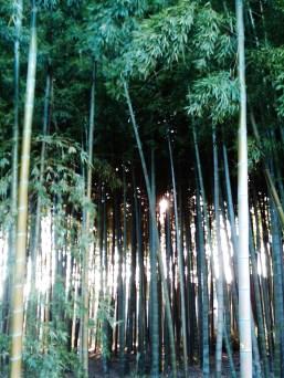 Chofu Tokyo bamboo grove near Nogawa