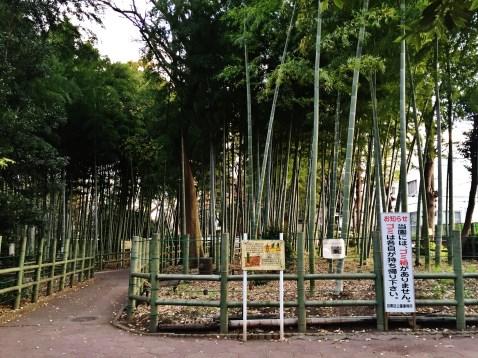 Suzume-no Oyado Ryokuchi Park bamboo path
