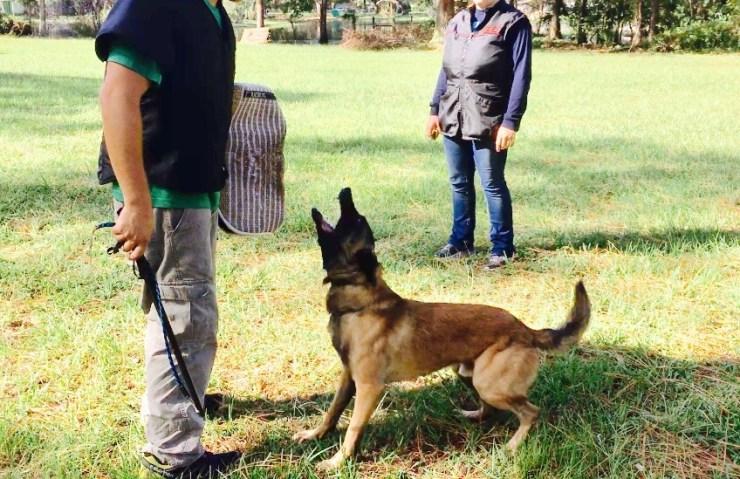 Protection-dog