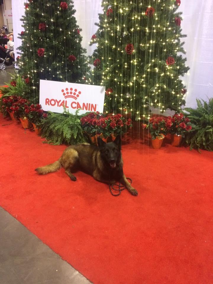 royal canin christmas