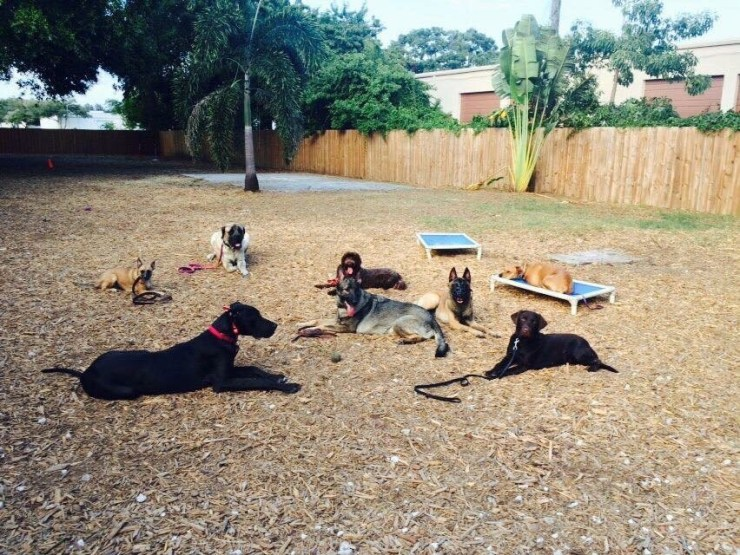 group dog training lessons