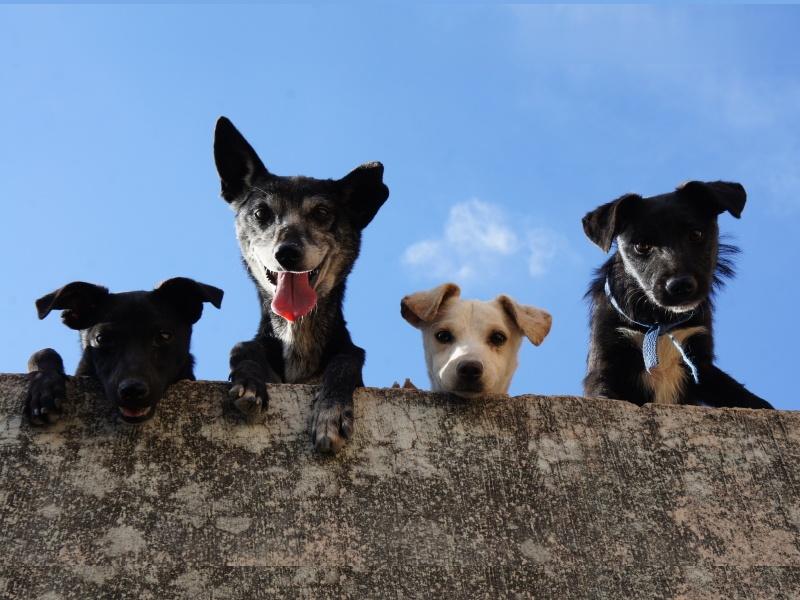 Boarding School Dogs