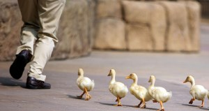 What the Duck Man Taught Me About Jesus