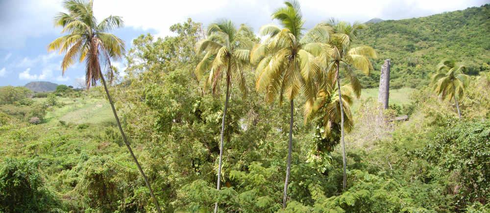 Romney Manor St Kitts