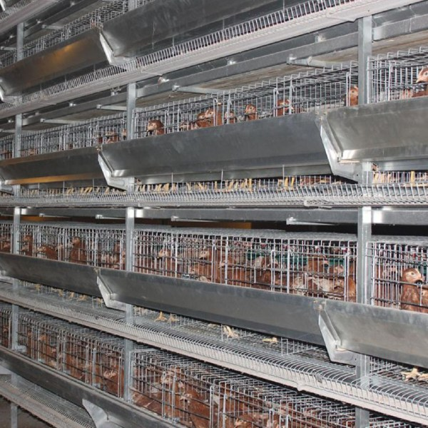 Bird-Cages