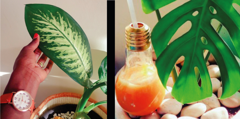 Let's Go Green By Mabel
