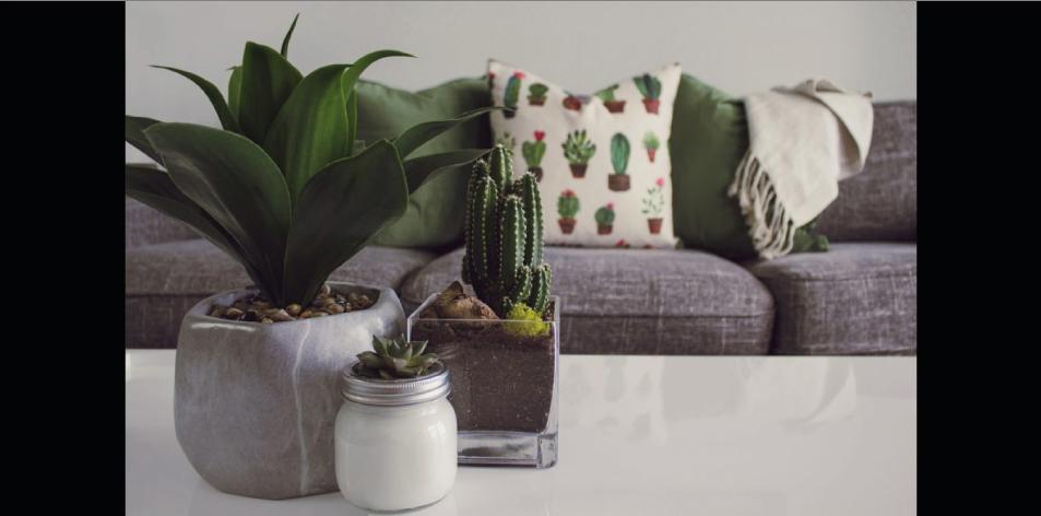 5 Indoor Garden Ideas For Small Spaces - H&S Homes & Gardens