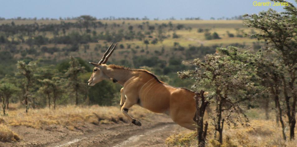 Ol Pejeta Safari