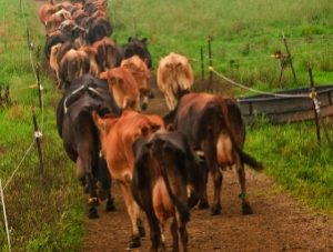 Schools, Colleges & Universities offering Animal Health and Production Certificate Course in Kenya, Intake, Application, Admission, Registration, Contacts, School Fees