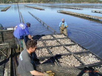 Schools, Colleges & Universities offering Aquaculture Technology