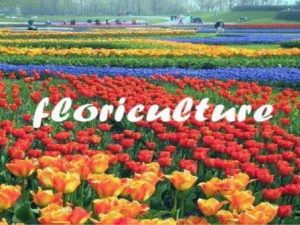 Schools, Colleges & Universities offering Certificate Higher Diploma and Diploma in Floriculture in Kenya, Intake, Application, Admission, Registration, Contacts, School Fees, Jobs, Vacancies