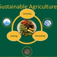 Schools, Colleges & Universities offering Certificate Higher Diploma and Diploma in Sustainable Agriculture and Rural Development Course in Kenya Intake, Application, Admission, Registration, Contacts, School Fees, Jobs, Vacancies