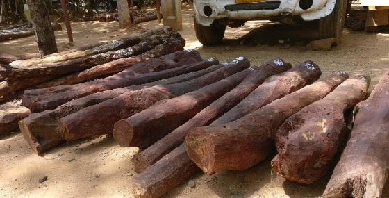 , DCI arrest minor, three others with rare trees worth Sh400,000