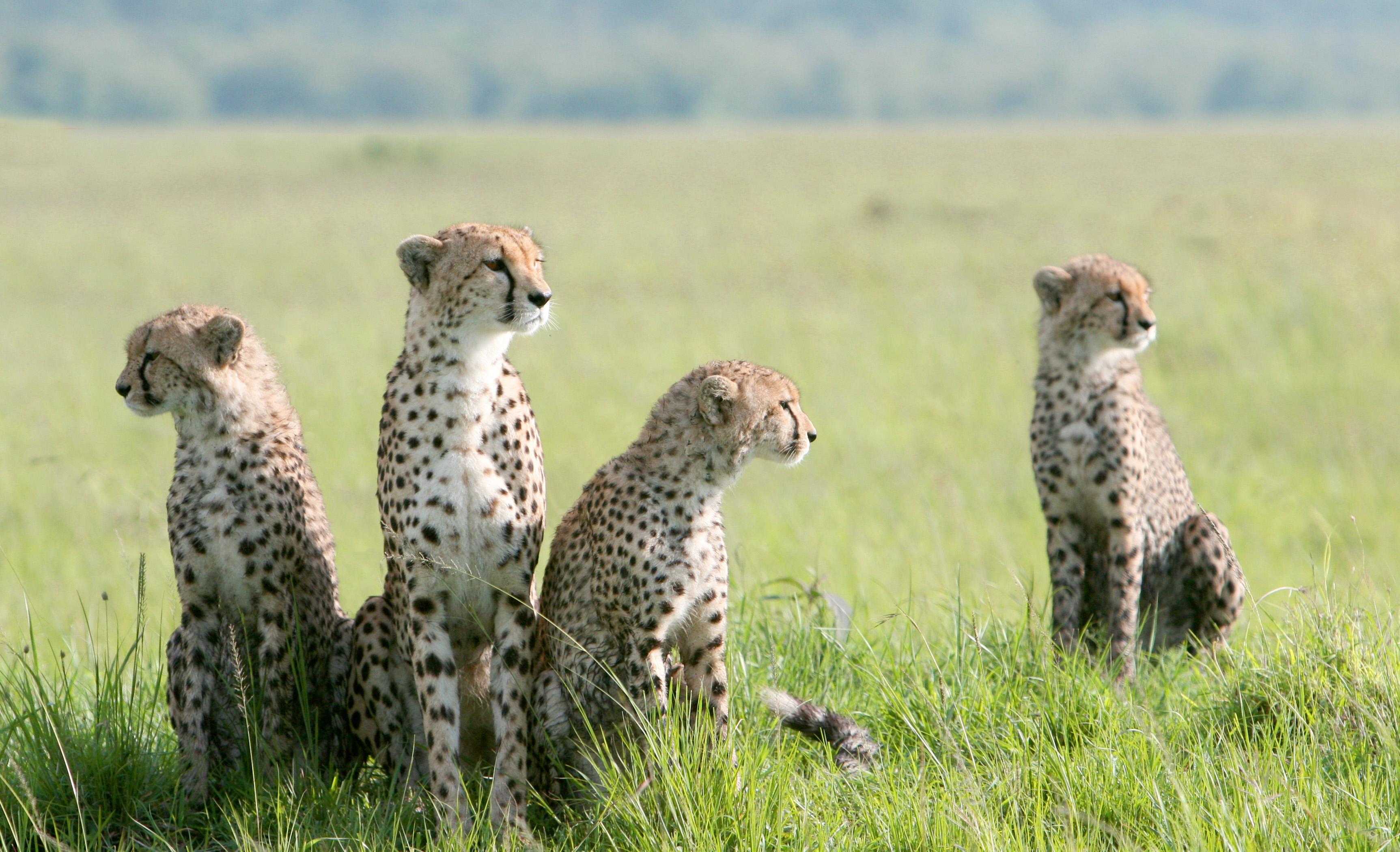 東非肯亞百萬動物大遷徙奇觀   我愛肯亞