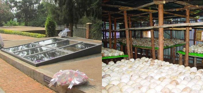 Gisozi Memorial Site Rwanda