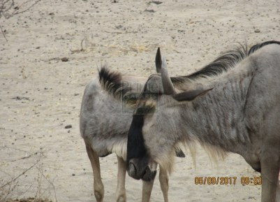 3 Days Kenya Safari in Tsavo East & Tsavo West National Parks