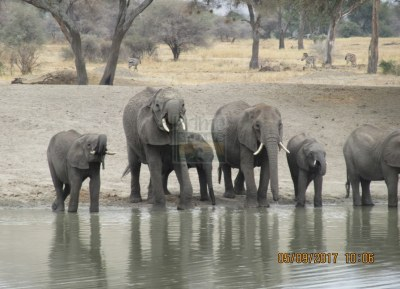10 Days Classic Kenya Safari Tour in Adamson