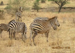 5 Days Kenya Safari Tour to Msambweni Beach