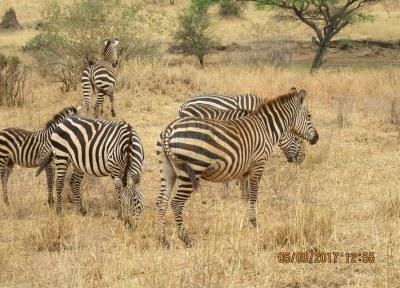 5 Days Kenya Safari Tour to Msambweni Beach