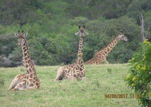 1 Day Kenya Safari to Amboseli National Park