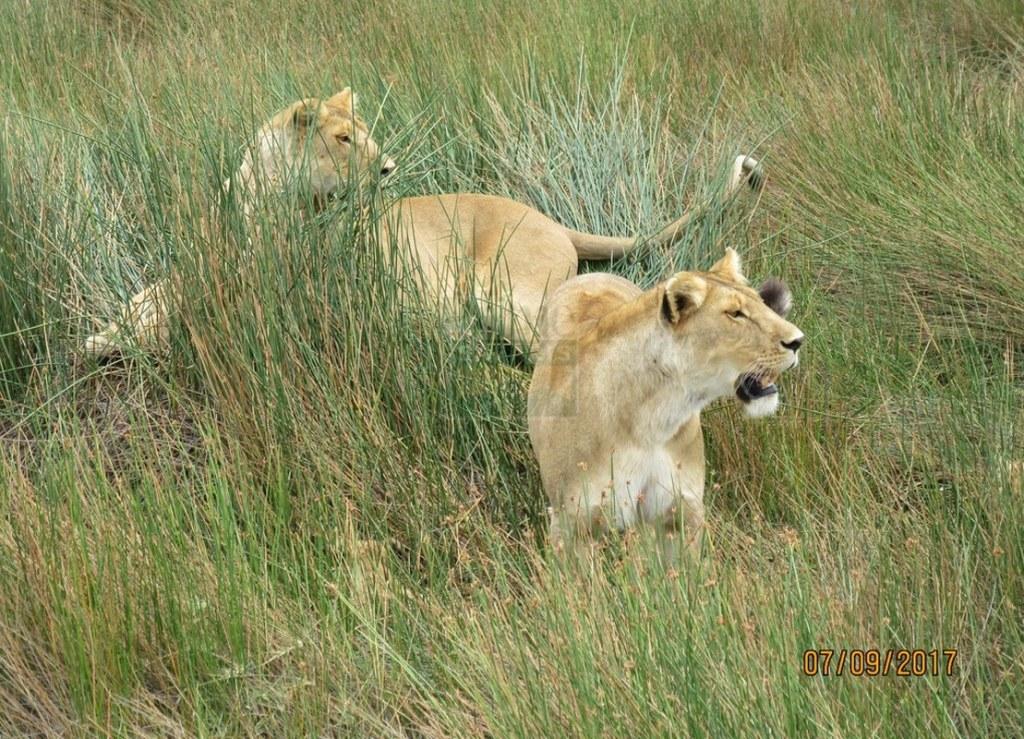 5 Days Maasai Mara Kenya Safari - Lake Nakuru & Naivasha Tour