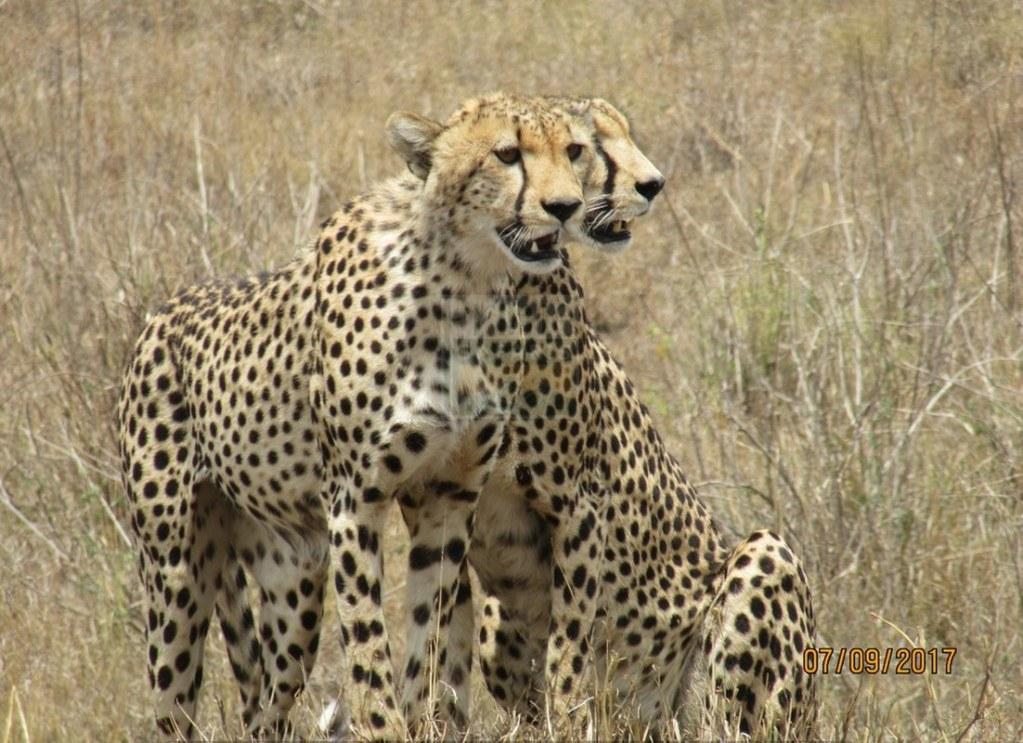 3 Days Kenya Wildlife Safari to Maasai Mara National Reserve
