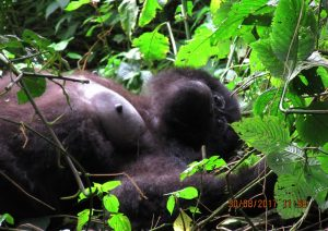 4 Days Rwanda Double Gorilla Safari to Volcanoes National Park