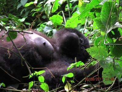 4 Days Rwanda Double Gorilla Safari to Volcanoes National Park