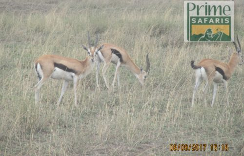 12 Days Kenya Wildlife Safari & Beach Holiday Kenya tour