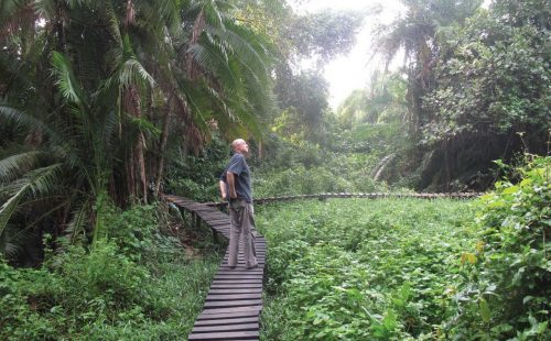Nature Walks And Night Walks in Kibale Forest National Park Uganda