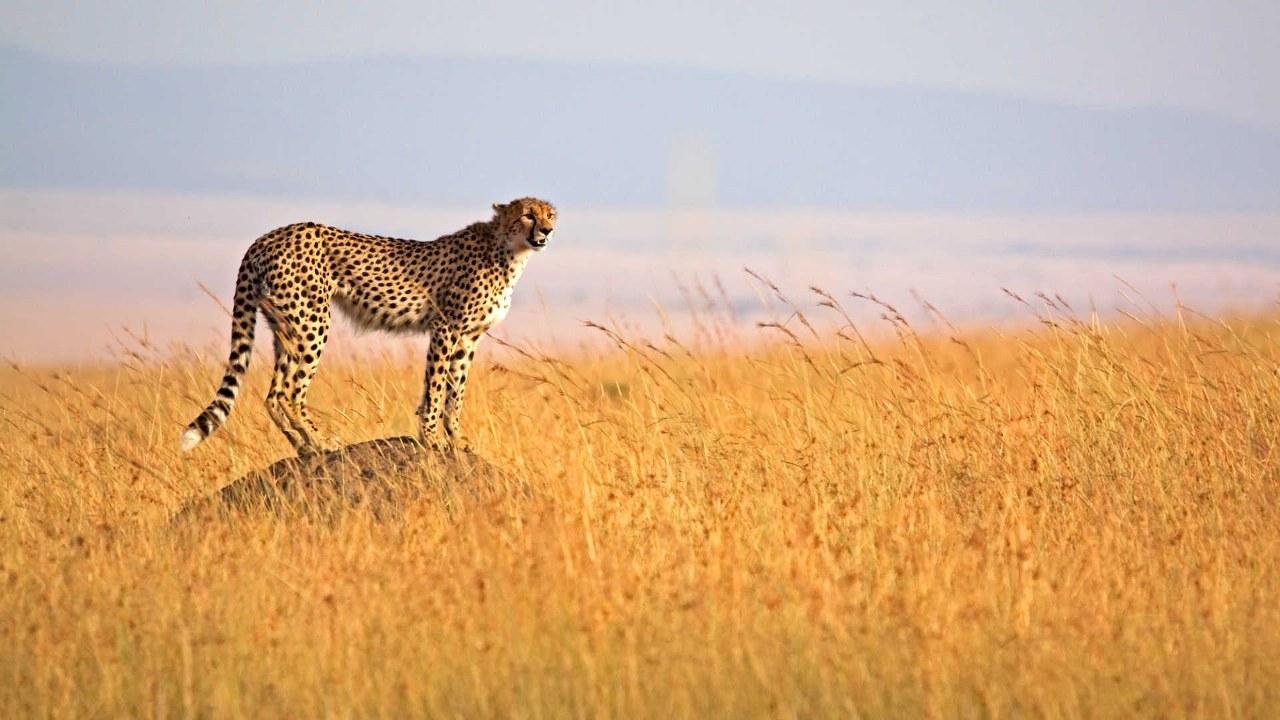 Uganda Kenya Tanzania Safaris
