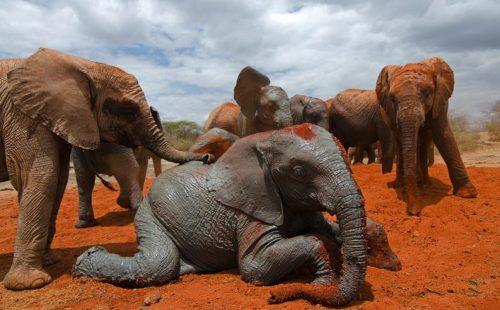 Wildlife Safari in Tsavo East National Park
