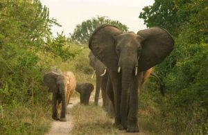 elephants in Tsavo West National park