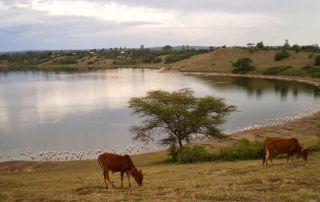 Simbi Nyaima