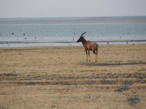 Wildlife Sibiloi National Park
