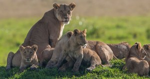 kenya safaris destinations